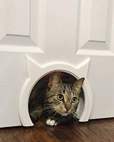 The Kitty Pass Interior Cat Door Hidden Litter Box Pet Door for cats up to 21 lbs Details can be found by clicking on the image. (This is an affiliate link) Hidden Litter Boxes, Dog Area, Pet Door, Photo Chat, Unique Cats, Unusual Pets, Cat Room, Cat Furniture, Crazy Cats