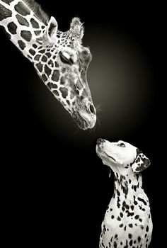 two spots!!! Dog and Giraffe...