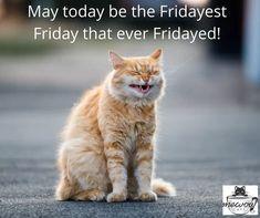 Happy Friday! #mewow #catcafe #happyfriday #cat #cats #catsandcoffee #adoptacat #adoptdontshop #catadoption #lovecats #kitten #kittens #cutecat #cutecatsofinstagram #catpicoftheday #rescuecatsofinstagram Instagram News, Cats Of Instagram, Cat Cafe, Happy Friday, Kittens, Adoption, Cute, Animals, Cute Kittens