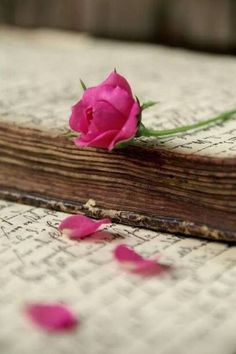 There is something so beautiful and vintage-y about old books and pink roses Flor Iphone Wallpaper, Book Flowers, Book Letters, Writing Letters, Single Rose, Jolie Photo, Rose Cottage, I Love Books, Pink Roses