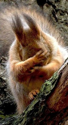 Yep, it's one of those days. Love this Squirrel! Beautiful animal photography, too.