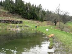 Dog Mountain,  Haven for Dogs! 150 acres covered with hiking trails and dog ponds. St. Johnsbury, Vermont.