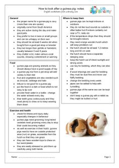 Pets: Guinea Pigs