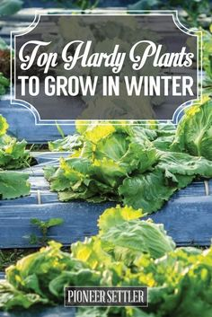 Top Hardy Plants to Grow in Winter | Homesteading Tips For Gardeners by Pioneer Settler at http://pioneersettler.com/top-hardy-plants-grow-winter/