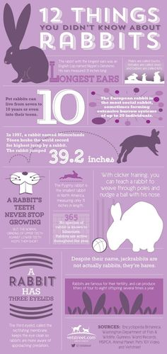 BlueRidgePetCenter: 12 Things You Didn't Know About Rabbits
