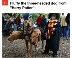 What a cute costume, any Harry Potter fans? ❤