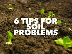 Whatever plants you are going to grow in your garden, you need the best quality soil possible. It should be well drained and aerated, with an ongoing supply of good quality nutrients. This may mean…