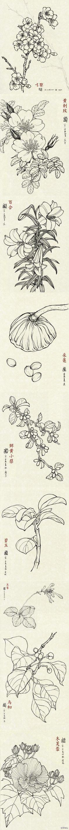 手绘。铅笔,黑白。花卉。绘画。