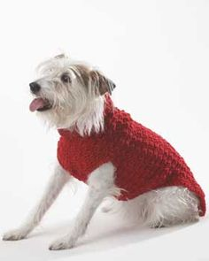Warm sweater for your best buddy: free pattern