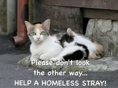 Trap Neuter Return ~ If you feed them, fix them, or you are just perpetuating the problem!