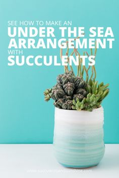 Don't some succulents look like coral - find out how to make an awesome under the sea arrangement with succulents!
