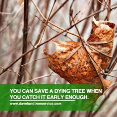 As a responsible property owner, you need to know the signs of a diseased tree. Learn how to spot a sick or dying tree along with some tips to remove them.
