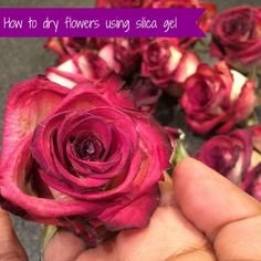 How to dry flowers using silica gel #flowerpreservation #weddings #roses #valentinesday