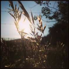 Light - grass