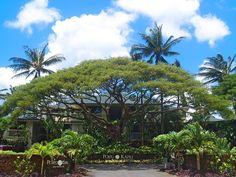 Poipu Kapili Vacation Rental - VRBO 257917 - 1 BR Poipu Condo in HI, Sunny South Shore Oceanfront Condo