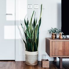 Indoor air is sometimes more polluted than outdoor air. Find out which houseplants are the most effective at purifying indoor air. Decor, Living Room, Furniture, Room, Interior, Houseplants Indoor, Home Decor, Indoor, Living Room Plants