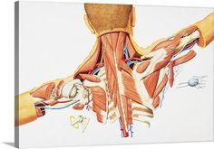 Premium Thick-Wrap Canvas Wall Art entitled Human internal anatomy of upper back #greatBIGcanvas #Modernism