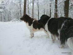 Onze Femke en Yarda genieten van de sneeuw