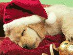 ¡Un estupendo salvapantallas de Perros Navideños totalmente gratuito!