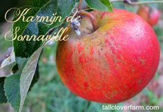 Karmijn de Sonnaville apple: one of the 10 best apples to grow