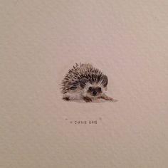 Hedgehog drawing - Lorraine Loots Watercolor Animals, Watercolor Paintings, Mini Paintings, Miniature Paintings, Watercolours, Wildlife Art, Hedgehog Tattoo, Hedgehog Drawing, Hedgehogs