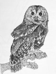 Owl 2017 Owl, Fine Art, Bird, Illustration, Animals, Animaux, Owls, Birds, Illustrations