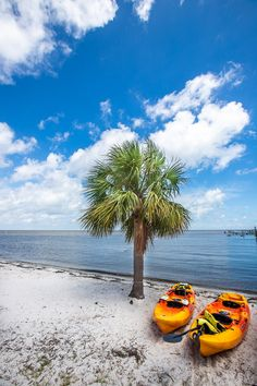 Planning to visit Cedar Key? Here are 12 of the best things to do in Cedar Key Florida including what activities to do, where to eat and drink, and where to stay. Don't visit Florida without learning about Cedar Key for your Florida vacation - it's charming and fun! #Florida #CedarKey #Beaches #Beachvacation #FLoridatravel #USAbeaches #USAtravel #familytravel #vacation #familyvacation