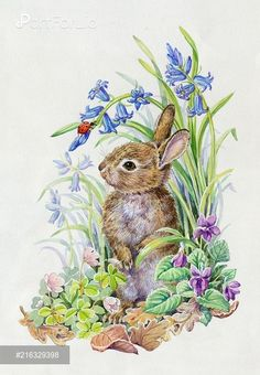 PortForLio - Young rabbit with ladybird, bluebells, violets etc Watercolor Animals, Watercolor Paintings, Illustrations, Illustration Art, Animal Drawings, Art Drawings, Bunny Painting, Easter Pictures, Rabbit Art