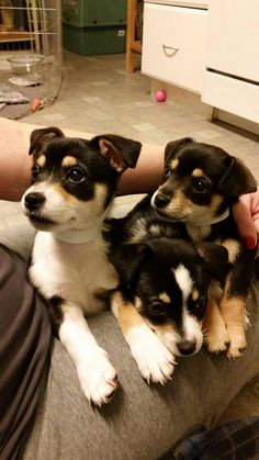 My house is a foster home for animals, here are some puppies!