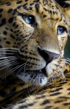 They say that some humans have the slight image of animals-- to look like a cheetah must be interesting..