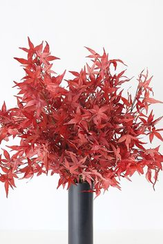 Get the look of stunning fall leaves, without the fuss. Shop artificial fall leaves for your home decor or fall wedding and skip the mess of real leaves. Simply style in your favorite everyday vase. Shop this look at Afloral.com. Real Plants, Fall Leaves, Fall Flowers, House Plants, Fall Wedding, Fall Decor, Vase, Green, Shop