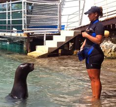 Sea lion Michele and her friend and trainer, Ana at Dolphin Discovery Isla Mujeres. Love!     www.dolphindiscovery.com