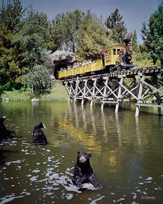 c. 1965 Running from 1960 to 1977 at Disneyland, the Mine Train at Frontierland took park guests on a rail trip through caverns, deserts and wilderness areas, populated by 204 lifelike bears, beavers and woodland creatures. IMAGE: DISNEY ENTERPRISES, INC.