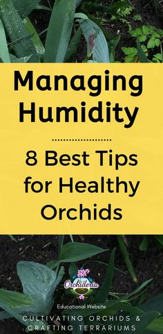 Managing Humidity: 8 Best Tips for Healthy Orchids — Orchideria Phalaenopsis Orchid Care, Orchid Plant Care, Orchid Plants, Indoor Orchids, Indoor Plants, Indoor Gardening, Garden Water Fountains, Water Garden, Orchid Terrarium