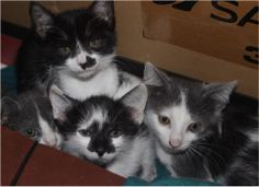 Adorable little kittens that were born  near the trash can. A friend arranged for them to be trasnported to a safe home,and they will soon go to their new homes
