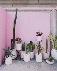 Botanical Beauty :: Plants :: Cacti :: Nature :: Palms :: Garden Decor :: Design + Style Inspiration