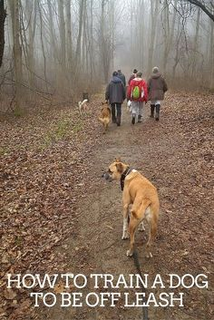How to train a dog to be off leash Visit Us