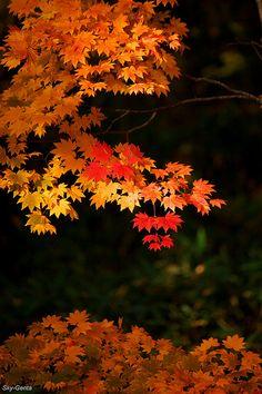 spot light | Flickr - Photo Sharing!