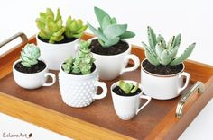 Teacup recipe suggestion: A group of succulents in all white… - Sukkulenten Garten Succulents In Containers, Cacti And Succulents, Planting Succulents, Cactus Plants, Planting Flowers, Succulent Planters, Suculentas Diy, Cactus Y Suculentas, Air Plants