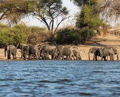 "175 Gostos, 20 Comentários - Rita Jorge   T R A V E L (@episodesofatrip) no Instagram: ""Follow @episodesofatrip . #episodesofatrip . . . . . #namibia🇳🇦 #african_portraits #africanelephant…"" Elephant, Animals, Instagram, Animales, Animaux, Elephants, Animal, Animais"