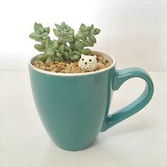 Succulent Cup