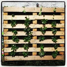 Palette strawberry planter seems like a super space saver idea. I'm doing t Palette strawberry p Outdoor Projects, Garden Projects, Farm Gardens, Outdoor Gardens, Lawn And Garden, Garden Beds, Strawberry Planters, Strawberry Fields Forever, Wooden Garden