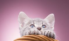 kitten by Сергей Ковалёв on 500px