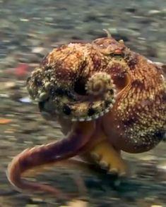 Beautiful Sea Creatures, Deep Sea Creatures, Animals Beautiful, Nature Animals, Animals And Pets, Funny Animals, Super Cute Animals, Cute Little Animals, Funny Animal Videos