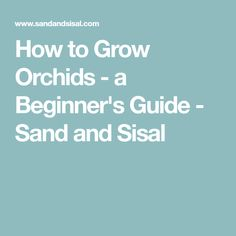 How to Grow Orchids - a Beginner's Guide - Sand and Sisal