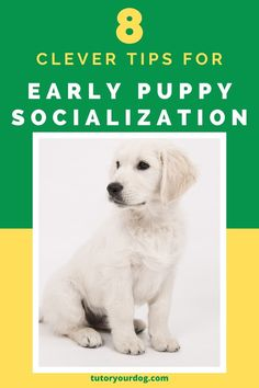 Early puppy socialization is an important part of your puppy's training. Learn how to socialize a puppy with these 8 clever tips. Click through to read the article. #puppysocialization #puppytraining Online Dog Training, Training Your Puppy, Dog Training Tips, Training Classes, Brain Training, Cute Little Puppies, Cute Dogs, Puppy Socialization, Excited Dog