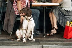 Dining Out: Do's and Don'ts for Dining with your Pet