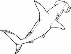 hammerhead shark drawings - Google Search