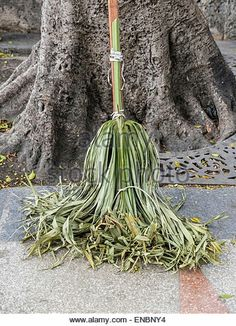 Palm frond brooms, cabbage palm usea