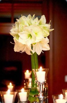White amaryllis bouquet - fleuriste.com  #amaryllis #white #bouquet